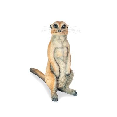 Young sitting meerkat