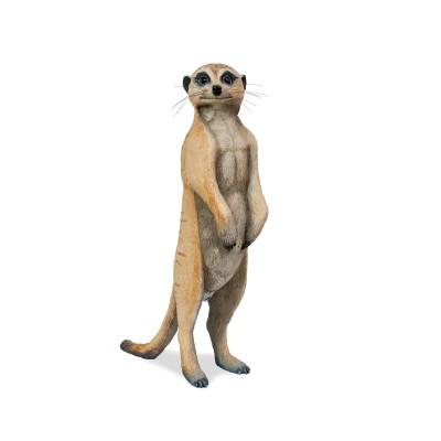 Adult male meerkat