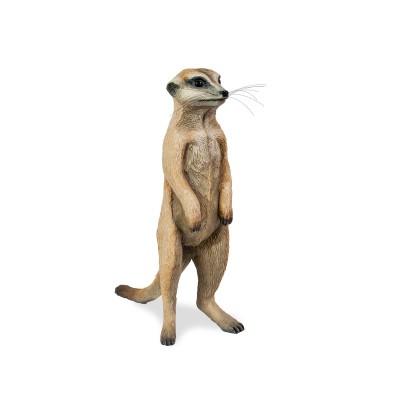 Young standing meerkat