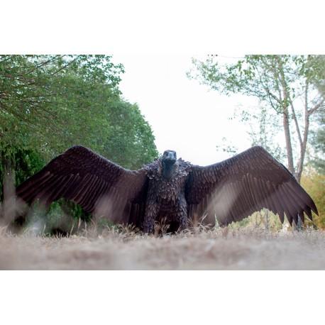 Buitre negro