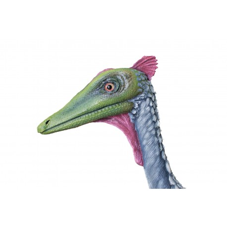 Pelecanimimus polyodon (hembra)