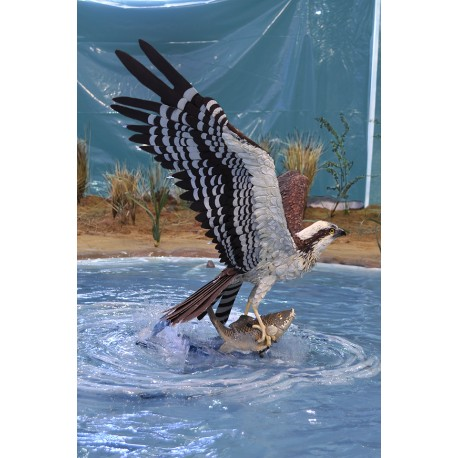 Águila pescadora (Ejemplo de encargo)