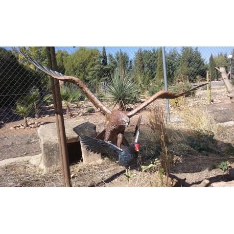 Aguilucho lagunero (Ejemplo de encargo)