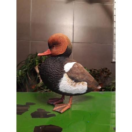 Pato colorado (ejemplo de encargo)