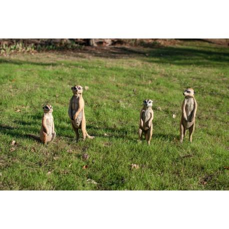 Familia de suricatas